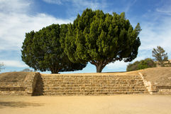 Monte Alban Oaxaca tree up the stairs. Mexico Royalty Free Stock Photo