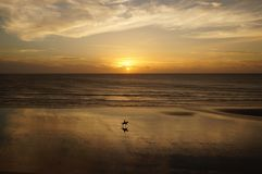 Monte au coucher du soleil Images stock