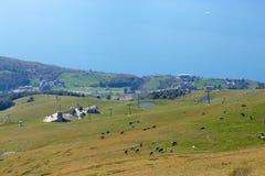 Monte Baldo Italia las vacas pastan en pastos de la montaña fotos de archivo