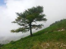 Monte Bondone Arkivfoto