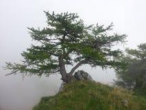 Monte Bondone Royaltyfri Bild