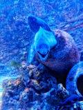Monte Carlo Aquarium. Sealife in the aquarium royalty free stock photos