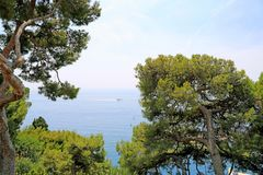 Monte-Carlo, Monaco - June 13, 2014: sea and seaside. With southern coniferous trees royalty free stock photo