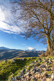Monte Cinto от Col de Сан Colombano в Корсике Стоковое Изображение