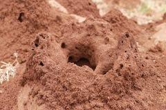 Monte da térmita Fotografia de Stock