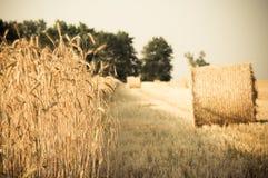 Monte de feno e trigo do rolamento foto de stock royalty free