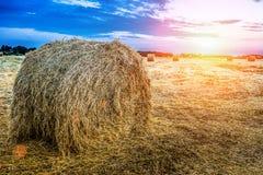 Monte de feno em um campo do outono fotografia de stock royalty free