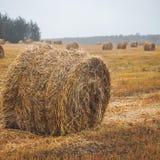 Monte de feno em um campo vazio após ter colhido, em nebuloso, o tempo do outono imagem de stock