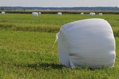 Monte de feno embalado no empacotamento plástico branco Imagens de Stock