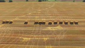 Monte de feno embalados no campo de trigo após a colheita, vídeo aéreo video estoque