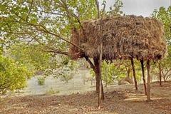 Monte de feno indiano em pernas de pau em um pomar Fotografia de Stock Royalty Free