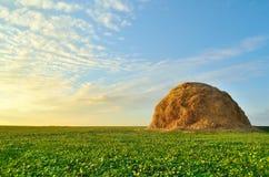 Monte de feno no campo Fotografia de Stock Royalty Free