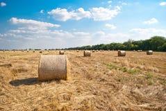 Monte de feno redondos em um campo da palha, em um dia de verão ensolarado, contra um fundo do céu e das árvores Fotos de Stock