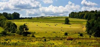 Monte de feno rolados em um campo após a colheita Fotografia de Stock