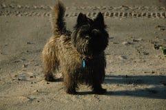 Monte de pedras Terrier Fotografia de Stock Royalty Free