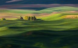 Monte do rolamento e terra de exploração agrícola Imagens de Stock Royalty Free