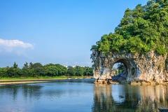 Monte do tronco do elefante Fotos de Stock