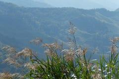 Monte do verão Fotografia de Stock