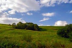 Monte e árvores da grama verde Imagens de Stock Royalty Free
