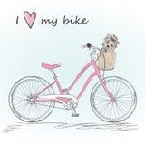 Monte en bicicleta con una cesta llena de pequeño perro Imágenes de archivo libres de regalías