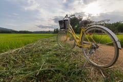 Monte en bicicleta en el camino con la opinión del campo del arroz, septentrional de Tailandia Imágenes de archivo libres de regalías