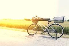 Monte en bicicleta en el camino delante de la granja del campo del arroz en la naturaleza, tono del vintage del conceptm del rele Foto de archivo