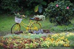 Monte en bicicleta en jardín imagen de archivo