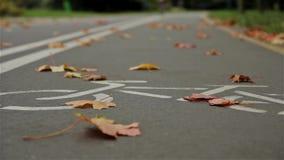 Monte en bicicleta la muestra en el camino, otoño del ciclista Ciérrese para arriba, tiro horizontal del resbalador metrajes
