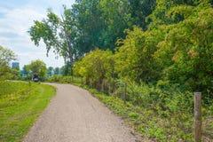 Monte en bicicleta la trayectoria a través de un campo alineado árbol en verano fotografía de archivo libre de regalías