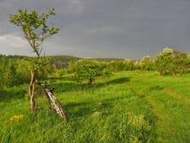 Monte en bicicleta por el árbol en el fondo del paisaje de la primavera Hierba verde y nubes en luz de la tarde Imagen de archivo