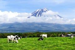 Monte Fuji e vacas em montanhas de Asagiri no Shizuoka, Japão imagens de stock