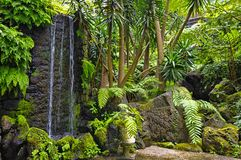 Monte garden, Funchal, Madeira island, Portugal Royalty Free Stock Image