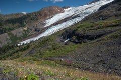 Monte geleiras do padeiro, angras, cachoeiras e wildflowers do verão, foto de stock royalty free