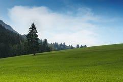 Monte idílico da grama verde com única árvore Fotos de Stock