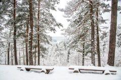 Monte na floresta do inverno Foto de Stock