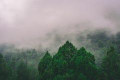 Monte nevoento com árvores verdes Imagens de Stock Royalty Free