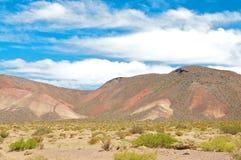 Monte no deserto od Argentina Foto de Stock