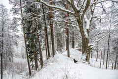 Monte no tempo de inverno Fotografia de Stock Royalty Free