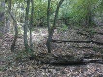 Monte Ramaca da paisagem Foto de Stock