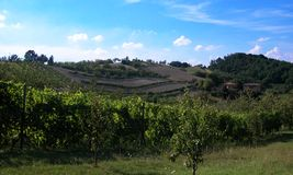 Vineyard in the hills of Bologna, Italy royalty free stock photos