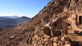 Monte Sinaí. Egipto almacen de video