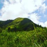 Monte verde foto de stock royalty free