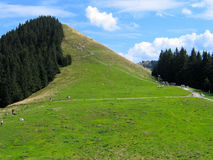 Monte verde Imagens de Stock