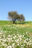 Monte verde-oliva Imagem de Stock Royalty Free