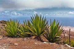 Monte Verde sur le sao Vicente, cap Photos libres de droits