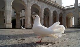 Montecassino-Garten Stockfotos