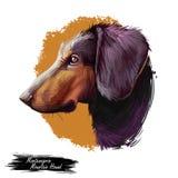 Montenegrinischer Gebirgsjagdhund, Hund der digitalen Kunstillustration crnogorski planinski goni Zucht Haustier von Montenegro n stock abbildung