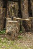 轴montenegro北树桩 免版税库存图片