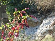 Montenegro, Blumen, Berge, 2018, August lizenzfreies stockfoto