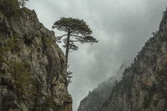 montenegro Durmitor Nationalpark Tara River Canyon Stockfoto